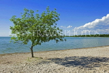 CANADA, Manitoba, Lake Manitoba, tree on beach at Steep Rock, CAN903JPL