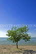 CANADA, Manitoba, Lake Manitoba, tree on beach at Steep Rock, CAN904JPL