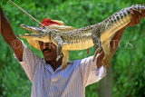 CUBA, Guama, man demonstrating traditional method of trapping crocodile, CUB151JPL