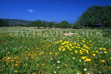 CYPRUS, Akamas area, countryside and spring flowers, CYP166JPL