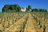 FRANCE, Languedoc-Roussillon, Pinet, small chateau and pruned vineyard, FRA968JPL