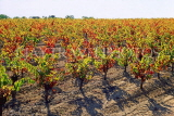 FRANCE, Languedoc-Roussillon, countryside (nr Capestang), harvested vineyards (autumn), FRA931JPL