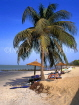 GAMBIA, Banjul, beach with coconut ree, sunbathers and thatched sunshades, GAM816JPL