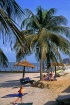 GAMBIA, Banjul, beach with sunbathers, coconut trees and thatched sunshades, GAM1031JPL