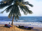 GAMBIA, beach scene with sunbeds and coconut tree, GAM818JPL