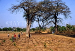 GAMBIA, countryside, Baobab trees and children playing, GAM993JPL