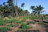 GAMBIA, farmed land, palm trees and vegetables, GAM935JPL
