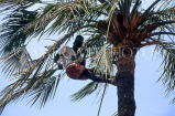 GAMBIA, man climbing palm tree (tapping sap for palm wine), GAM1001JPL