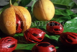 GRENADA, Nutmeg spice, Nutmeg in fruit and mace, GRE451JPL