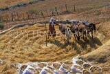 Greek Islands, AMORGOS, Egiali, farmer with donkeys, threshing, GIC666JPL