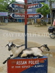 INDIA, Assam, goats resting in an intersection on Majuli Island, IND1437JPL