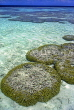 MALDIVE ISLANDS, Coral reef, exposed coral at low tide, MAL664JPL