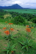 MAURITIUS, Casela Nature Park, countryside and Aluvera flowers, MRU263JPL