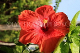 SINGAPORE, Gardens by the Bay, Hibiscus flower, red, SIN904JPL