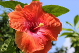 SINGAPORE, Gardens by the Bay, Hibiscus flower, red, SIN905JPL