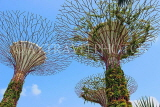 SINGAPORE, Gardens by the Bay, Supertree Grove, SIN435JPL