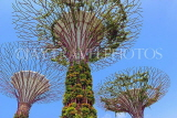 SINGAPORE, Gardens by the Bay, Supertree Grove, SIN438JPL