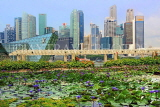 SINGAPORE, Marina Bay promenade, lily pond, and Singapore skyline, SIN1282JPL
