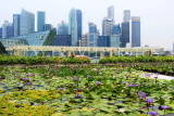 SINGAPORE, Marina Bay promenade, lily pond, and Singapore skyline, SIN1302JPL