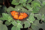 SOUTH AFRICA, Commodore Butterfly, SA1342JPL