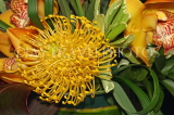 SOUTH AFRICA, Protea flower, SA1355JPL