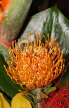 SOUTH AFRICA, Protea flower, SA1356JPL