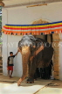 SRI LANKA, Kandy, Temple of the Tooth (Dalada Maligawa), Sri Natha Devalaya, elephant entering, SLK3501JPL