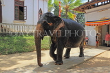 SRI LANKA, Kandy, Temple of the Tooth (Dalada Maligawa), Sri Natha Devalaya, elephant entering, SLK3502JPL