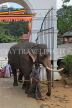 SRI LANKA, Kandy, Temple of the Tooth (Dalada Maligawa), Sri Natha Devalaya (temple), elephant entering, SLK3500JPL