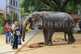 SRI LANKA, Kandy, Temple of the Tooth (Dalada Maligawa), Sri Natha Devalaya, visitors, elephant, SLK3494JPL