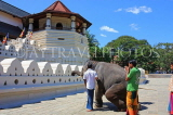 SRI LANKA, Kandy, Temple of the Tooth (Dalada Maligawa), and elephant trained to kneel before temple, SLK2904JPL