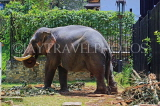 SRI LANKA, Kandy, Temple of the Tooth (Dalada Maligawa), elephant at temple grounds, SLK3307JPL