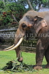 SRI LANKA, Kandy, Temple of the Tooth (Dalada Maligawa), elephant at temple grounds, SLK3331JPL
