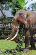 SRI LANKA, Kandy, Temple of the Tooth (Dalada Maligawa), elephant at temple grounds, SLK3333JPL