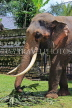 SRI LANKA, Kandy, Temple of the Tooth (Dalada Maligawa), elephant at temple grounds, SLK3334JPL