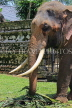 SRI LANKA, Kandy, Temple of the Tooth (Dalada Maligawa), elephant at temple grounds, SLK3335JPL