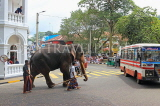 SRI LANKA, Kandy, town centre, elephant and mahout crossing the road, SLK3714JPL