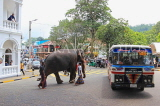 SRI LANKA, Kandy, town centre, elephant and mahout crossing the road, SLK3715JPL