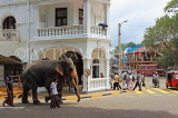 SRI LANKA, Kandy, town centre, elephant and mahout walking along road, SLK3713JPL