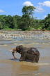 SRI LANKA, Pinnewala, elephant (tusker) bathing in Maha Oya (Big River), SLK2268JPL
