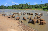 SRI LANKA, Pinnewala, elephant bathing in Maha Oya (Big River), SLK2319JPL