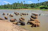 SRI LANKA, Pinnewala, elephant bathing in Maha Oya (Big River), SLK2323JPL