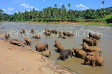 SRI LANKA, Pinnewala, elephant bathing in Maha Oya (Big River), SLK2326JPL