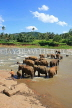SRI LANKA, Pinnewala, elephants bathing in Maha Oya (Big River), SLK2264JPL