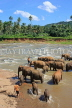 SRI LANKA, Pinnewala, elephants bathing in Maha Oya (Big River), SLK2273JPL