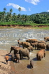 SRI LANKA, Pinnewala, elephants bathing in Maha Oya (Big River), SLK2274JPL