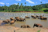 SRI LANKA, Pinnewala, elephants bathing in Maha Oya (Big River), SLK2342JPL