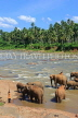 SRI LANKA, Pinnewala, elephants bathing in Maha Oya (Big River), SLK2345JPL