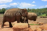 SRI LANKA, Pinnewala Elephant Orphanage, adult elephant, SLK2303JPL