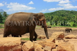 SRI LANKA, Pinnewala Elephant Orphanage, adult elephant, SLK2304JPL